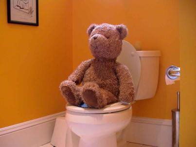 Teaching bear to go potty